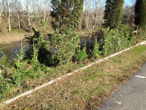 Cresce il bel giardino fiorito di Salerano con nuove piantumazioni