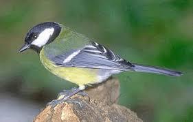 Birdwatching a Salerano